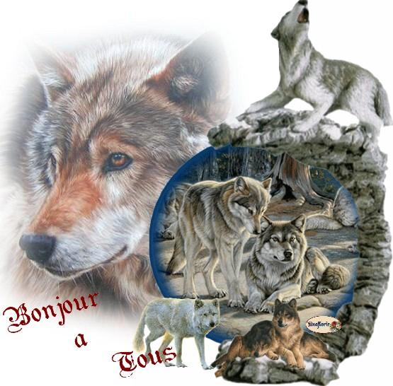 Le loup dans faune awjxwtmo